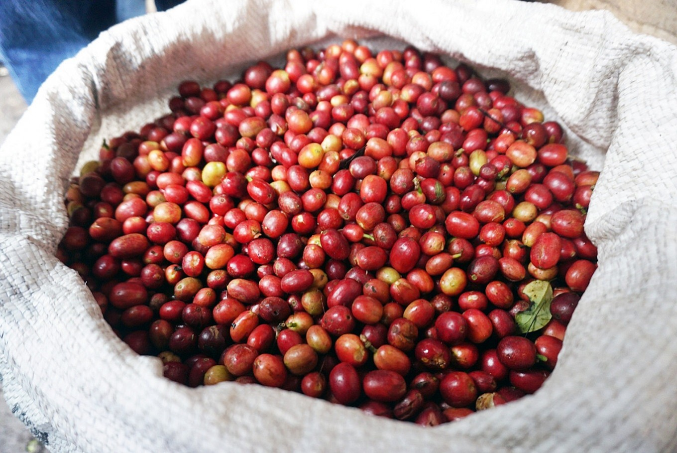 Flavorful journey into coffee provenance