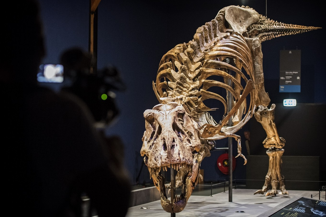 T. rex was not feathery, study says
