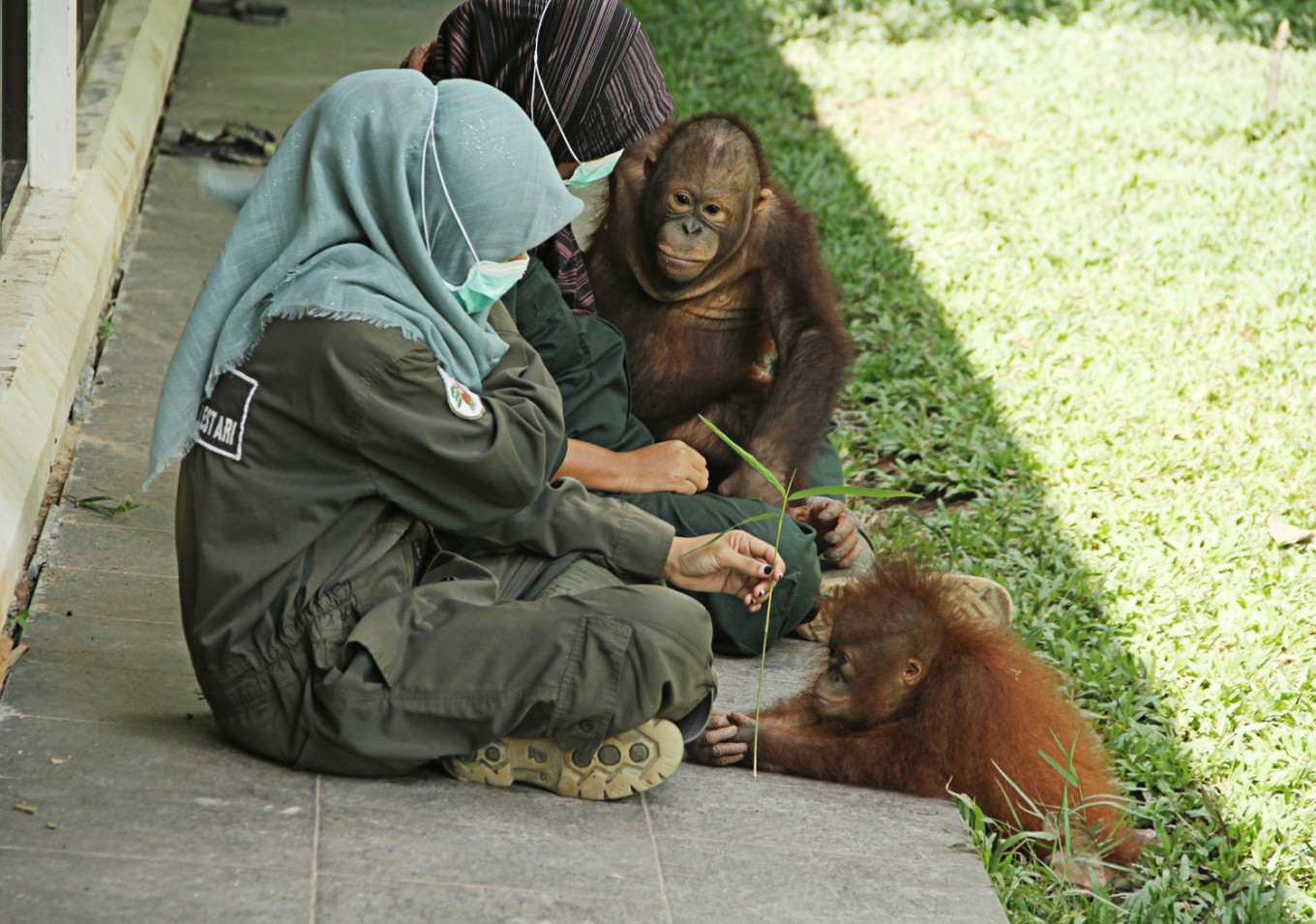 Orangutan confiscated from East Kalimantan resident