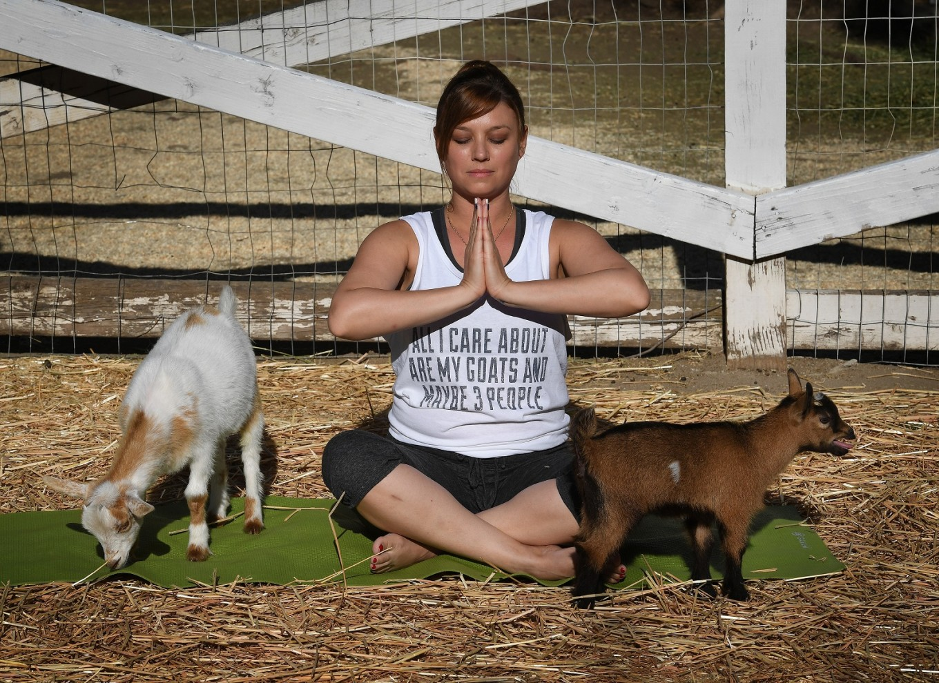 Yoga with goats craze takes off in US