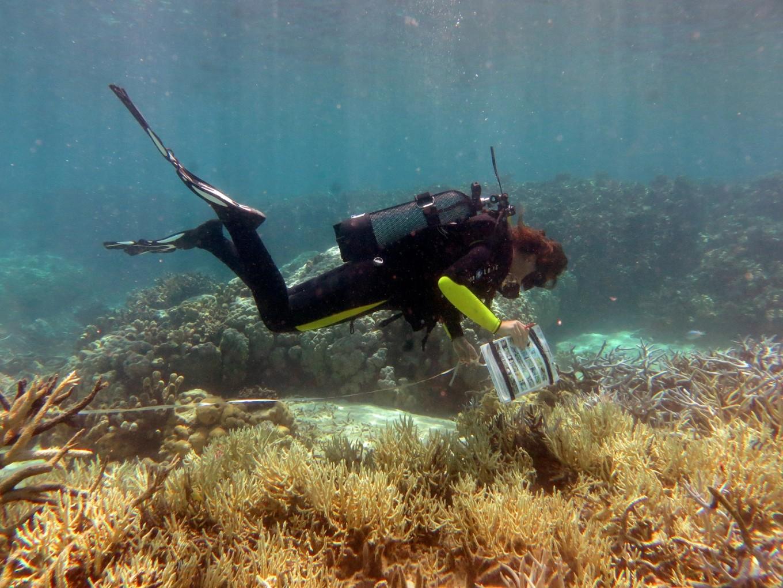 Global coral bleaching may be ending, US agency says