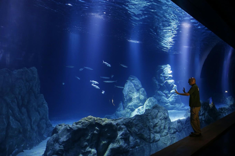 Holy water: Jerusalem aquarium set to open