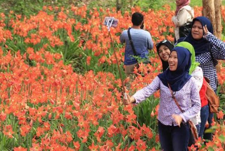 Yogyakarta's 'viral' garden in bloom