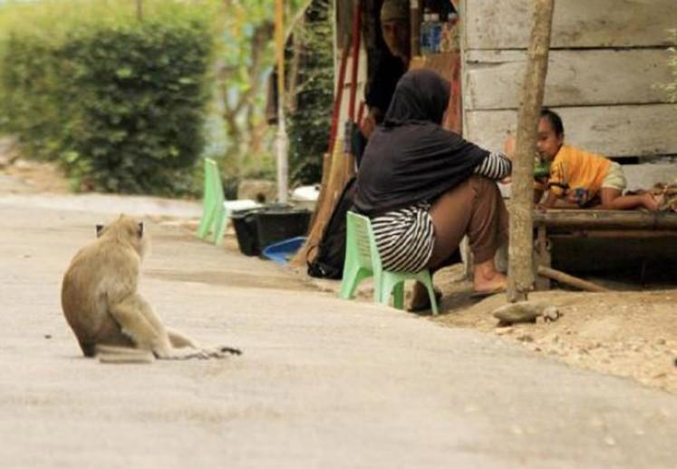 A monkey watches locals in Cikakak village, Wangon district, Banyumas regency, Central Java.