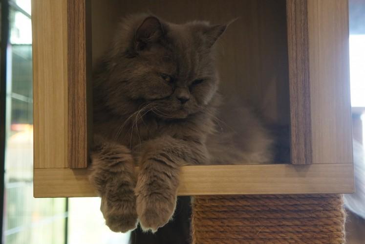 Cutie Cats Cafe offers furry feline
