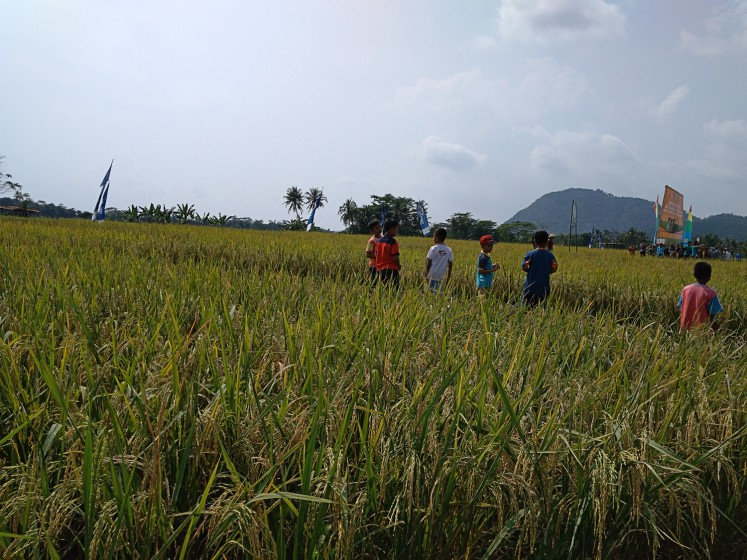 Green playground: Children play in a field where farmers plant 3S, a pest-resistant paddy variety developed by the Bogor Agricultural University (IPB).