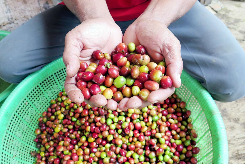 Batam hosts Wonderful Batam Fiesta Coffee & Archipelago Cuisines