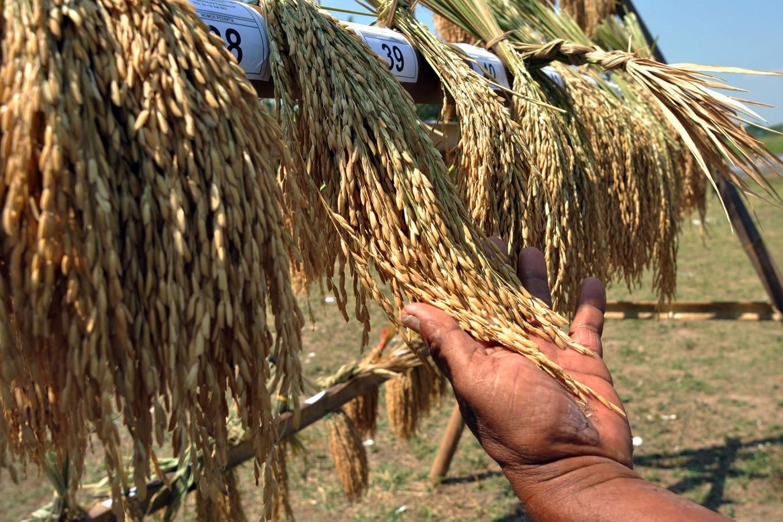 The Return of 'Mbok Sri,' a celebration of the rice harvest
