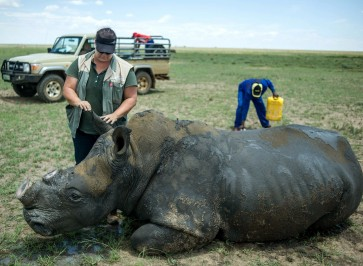 South Africa's first online rhino horn auction set to open