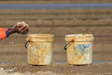 A farmer fills two buckets with salt harvested from the field. Antara/Dedhez Anggara