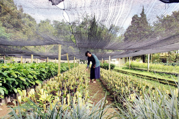 Checking things out: Wedya Julianti in the plant nursery at the Kawisari plantation.