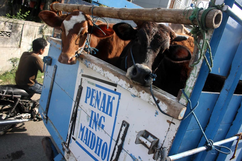 Bekonang cattle market attracts public attention