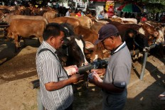 Transaction: Cattle traders settle a deal in cash on site. JP/Maksum Nur Fauzan