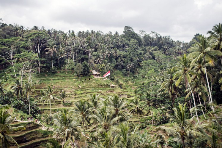Green territory: A red and white flag is seen in the middle of a green paddy field in Ceking, Tegalalang, Gianyar, ahead of the country's Independence Day in August. Paddy field terraces are popular tourist destinations in Bali.