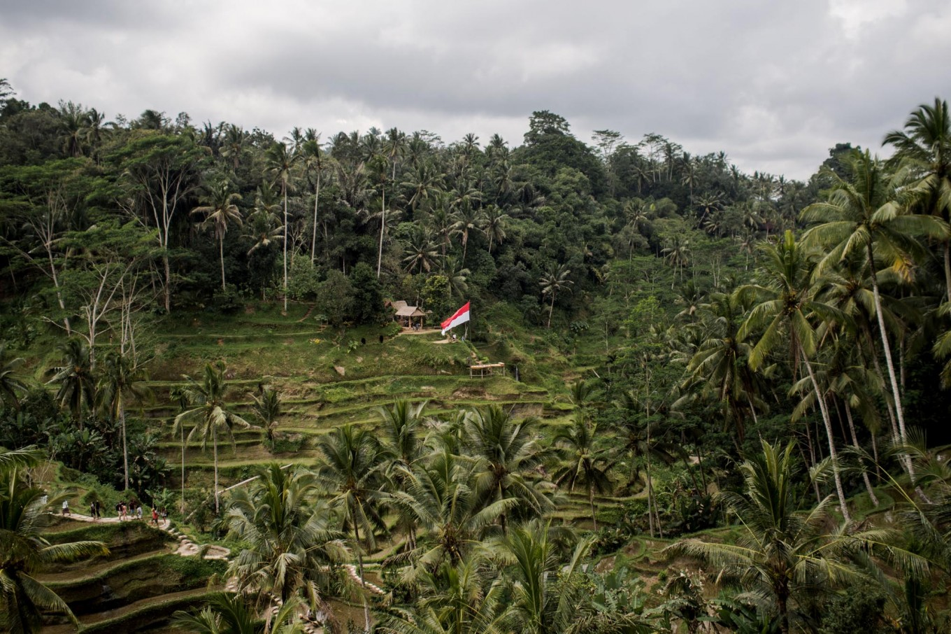 Green territory: A red and white flag is seen in the middle of a green paddy field in Ceking, Tegalalang, Gianyar, ahead of the country's Independence Day in August. Paddy field terraces are popular tourist destinations in Bali. JP/ Anggara Mahendra