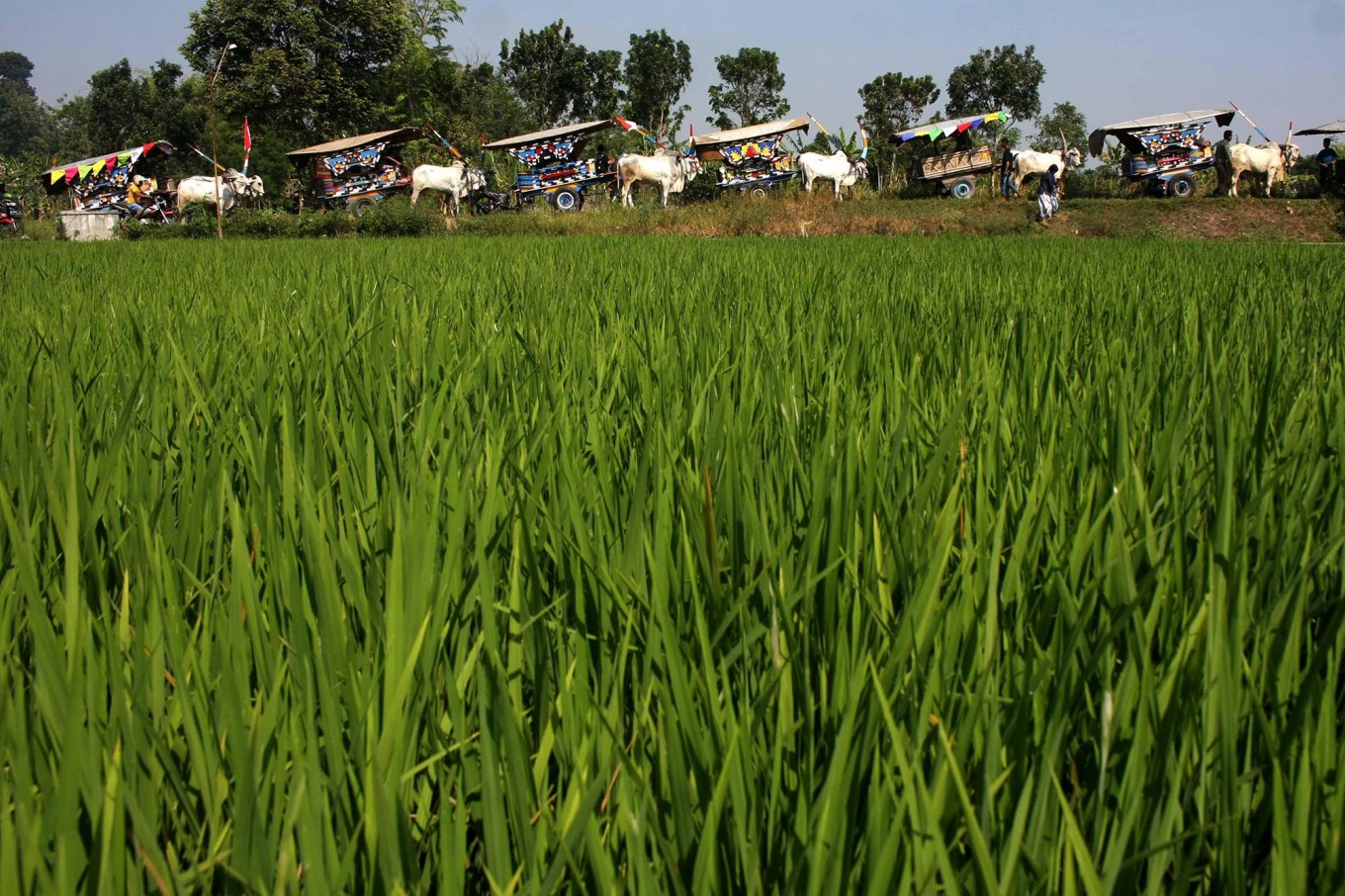 Bulog fails to reach target to absorb farmers' rice