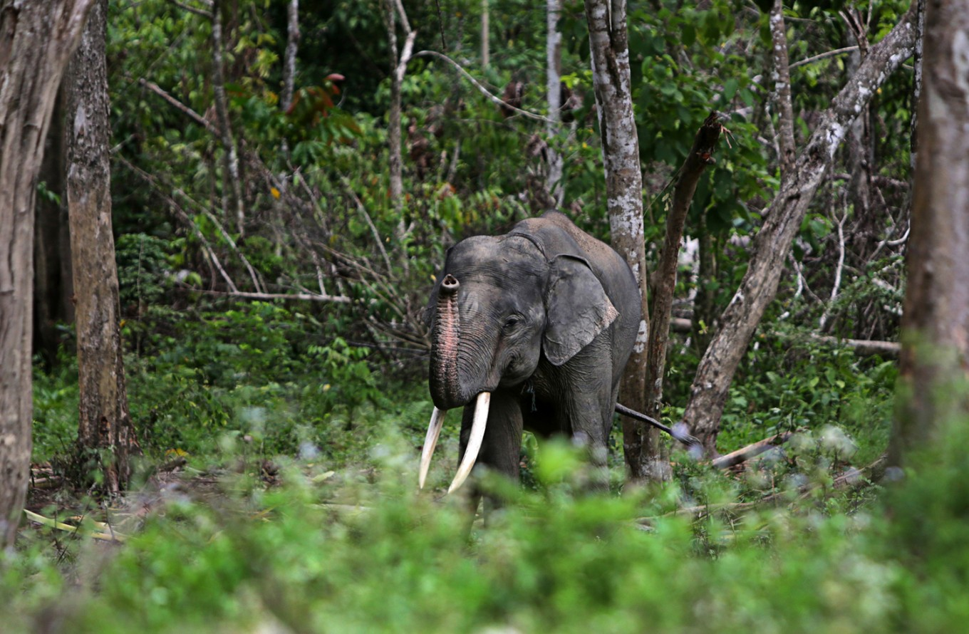 Tesso Nilo National Park welcomes newborn elephant