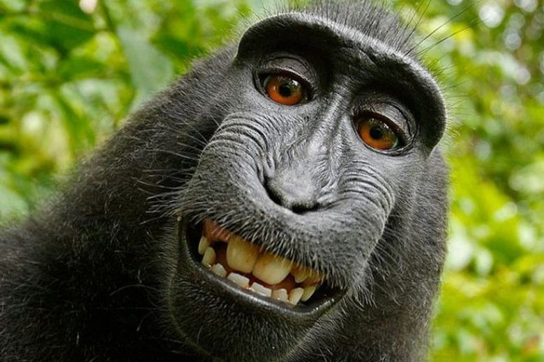 Monkey in 'selfie' cannot sue for copyright, US court says