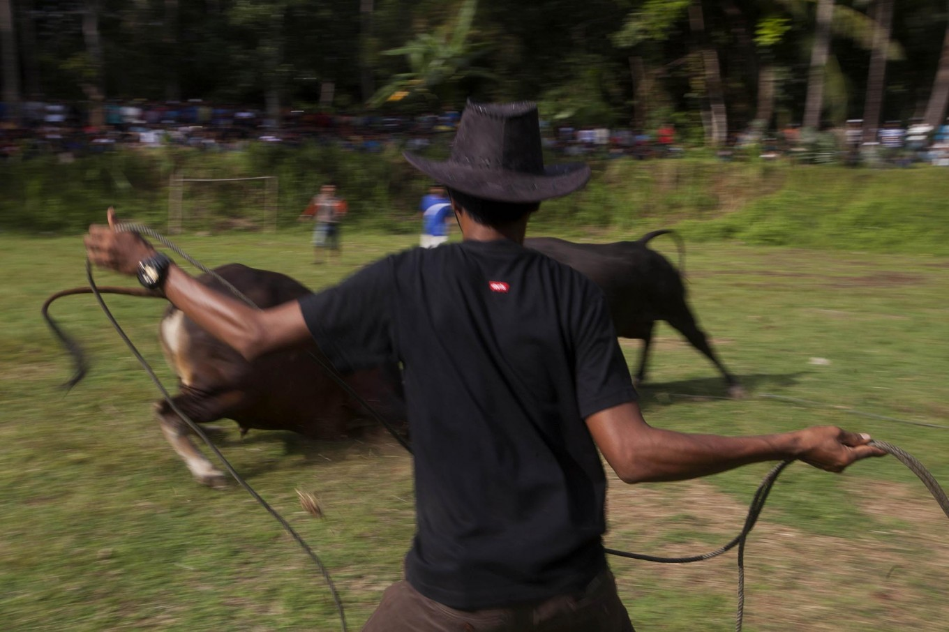 A handler with a lasso on guard to avoid a bull from leaving the field and possibly endangering the spectators. JP/Sigit Pamungkas