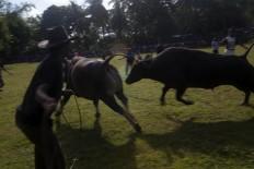 Bulls  battle it out. JP/Sigit Pamungkas