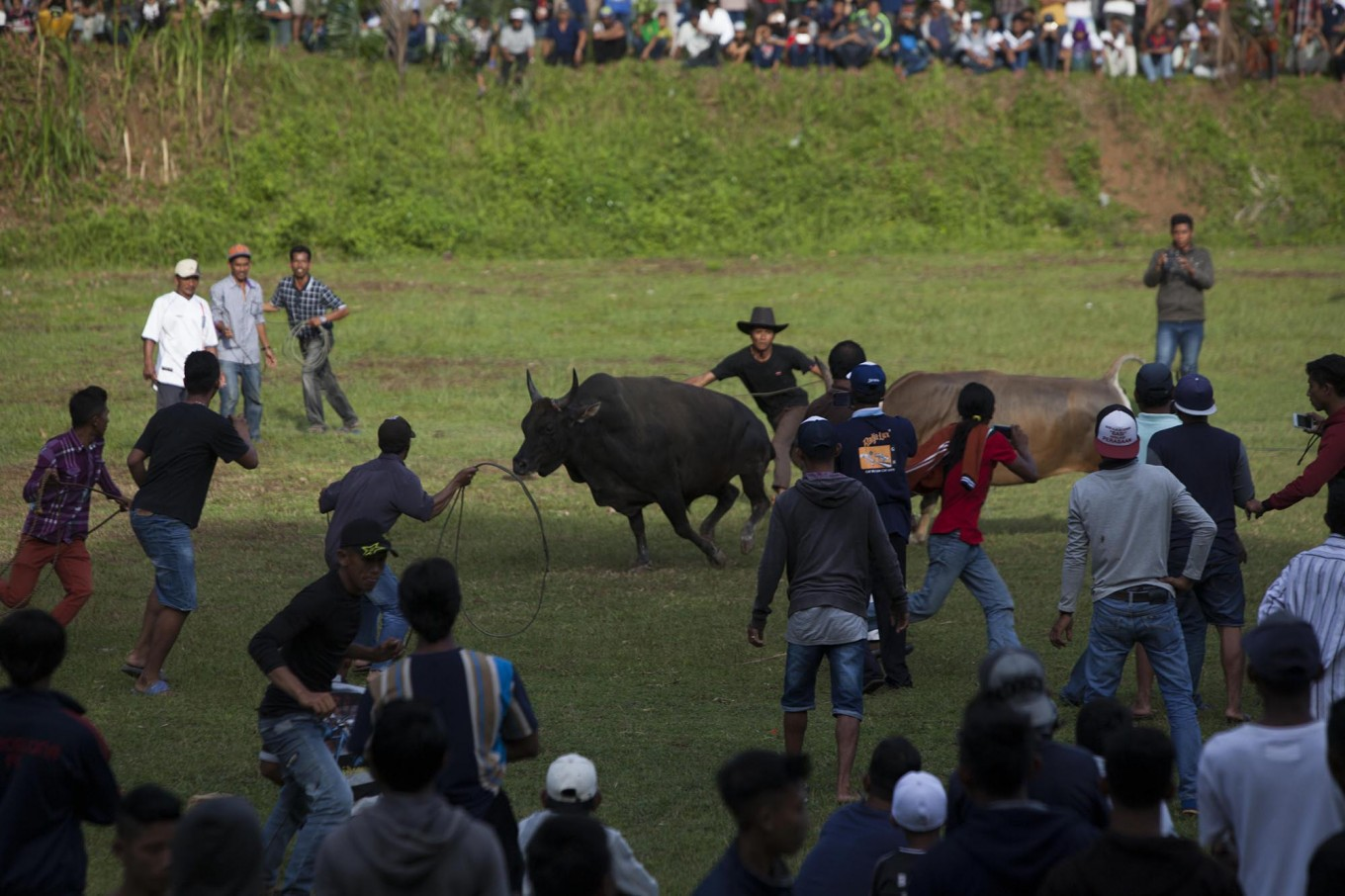 Guards try to catch an escaped bull. JP/Sigit Pamungkas