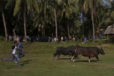 Two men run after a bull as it tries to run away. JP/Sigit Pamungkas