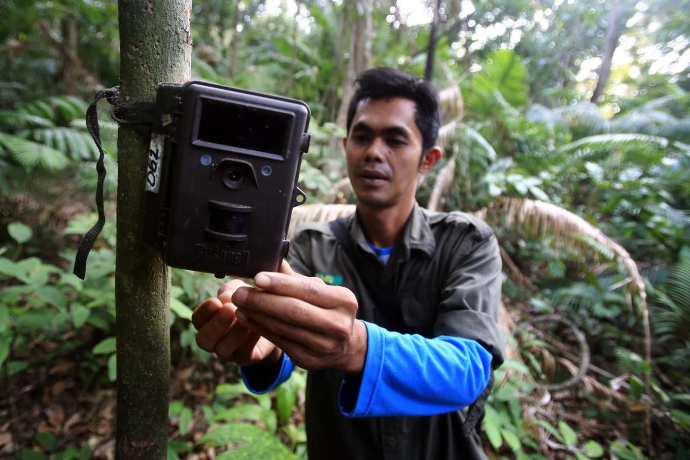 Observation tool: A member of the monitoring unit installs a video trap to record the presence of the endangered Javan rhinos. JP/Dhoni Setiawan