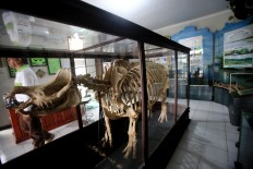 Evidence:The skeleton of a Javan rhino named Sultan is a welcoming icon at Ujung Kulon National Park.JP/Dhoni Setiawan