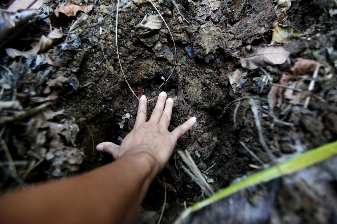 Fresh trace: A member of the monitoring unit measures the footprint of a Javan rhino, estimated to have passed through the area less than 24 hours ago. JP/Dhoni Setiawan