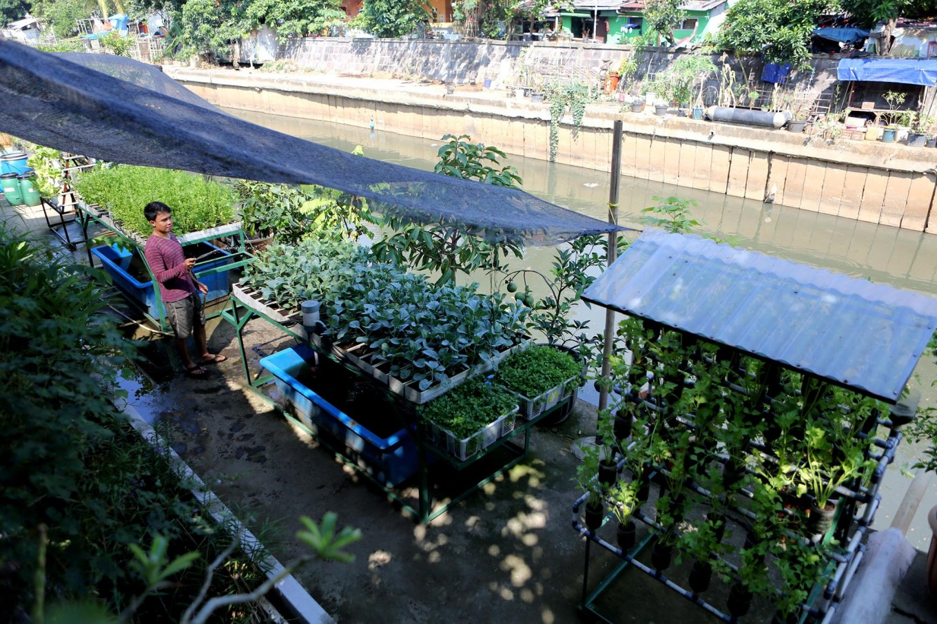 Urbanites find solace in urban farming amid COVID-19 quarantine