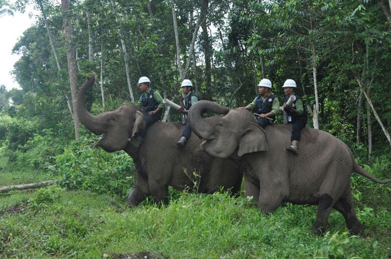 Elephant Flying Squad Keeps the Peace