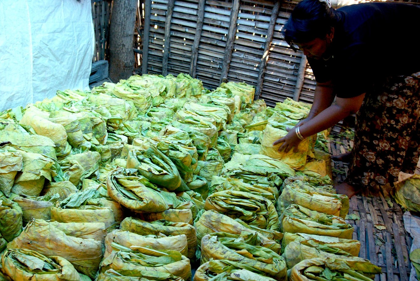 A woman arranges the folded tobacco leaves into neat rows for processing further. JP/Wahyoe Boediwardhana