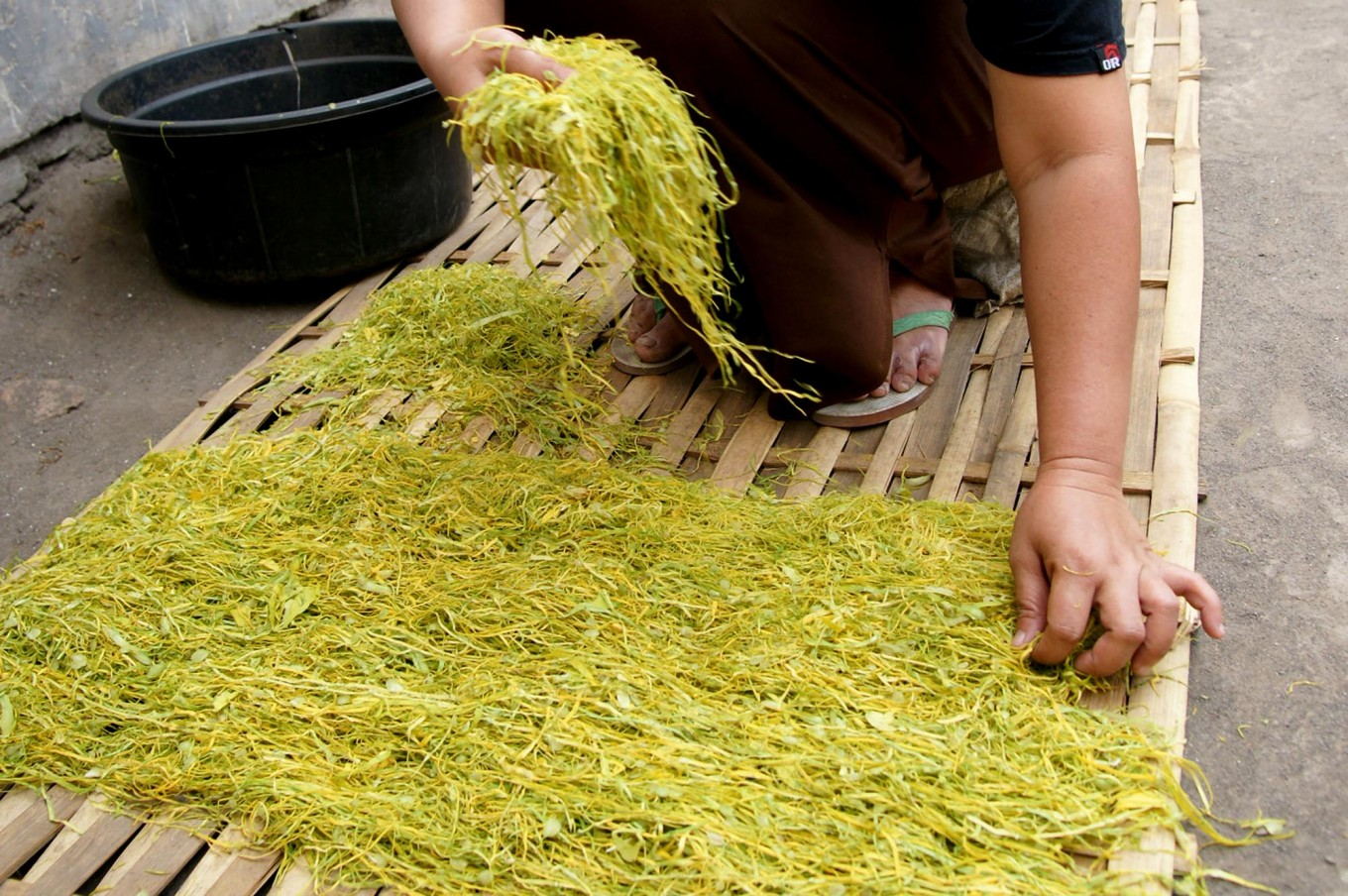 A Randutatah village woman arranges shredded tobacco leaves on a bamboo rack for curing in the sun. JP/Wahyoe Boediwardhana