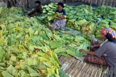 Women at a plantation factory in Randutatah village, Paiton district, Purbolinggo regency fold pre-dried tobacco leaves into rolls. JP/Wahyoe Boediwardhana