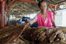 A woman worker sorts cured whole-leaf tobacco at a factory in Sumber Pinang village, of Pakusari district, Jember regency. JP/Wahyoe Boediwardhana