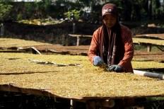 Mendah, a 49-year- old worker, tidies up shredded tobacco leaves on a curing board, in Puyung village, Jonggat district, Lombok Tengah regency. JP/Wahyoe Boediwardhana