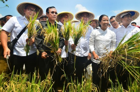 Peak rice harvest in February, says minister