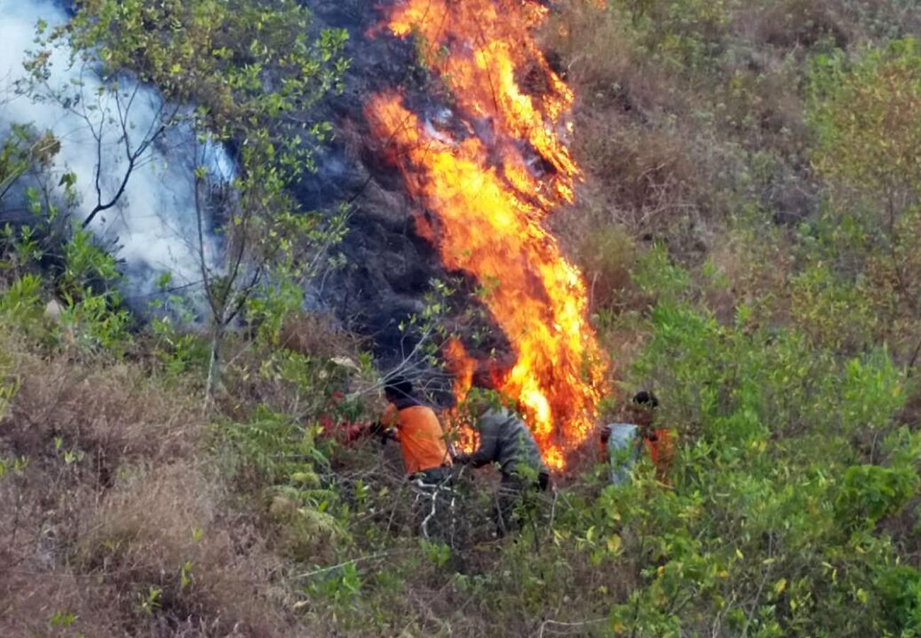 Fire burns 12 hectares of Mount Rinjani area