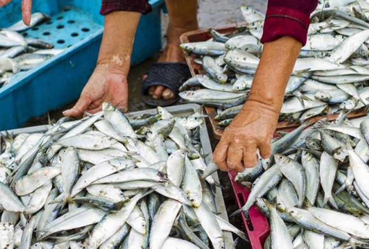 Fish, feminists, fishy business and religious bias