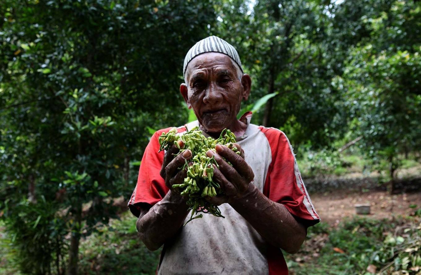 The spice of life: Dang Warang, 80, holds up clove flower buds he has harvested in Lasiela, Maluku. JP/ Arief Suhardiman