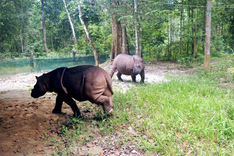 Play time: Delilah (left) plays around with her mother, Ratu.