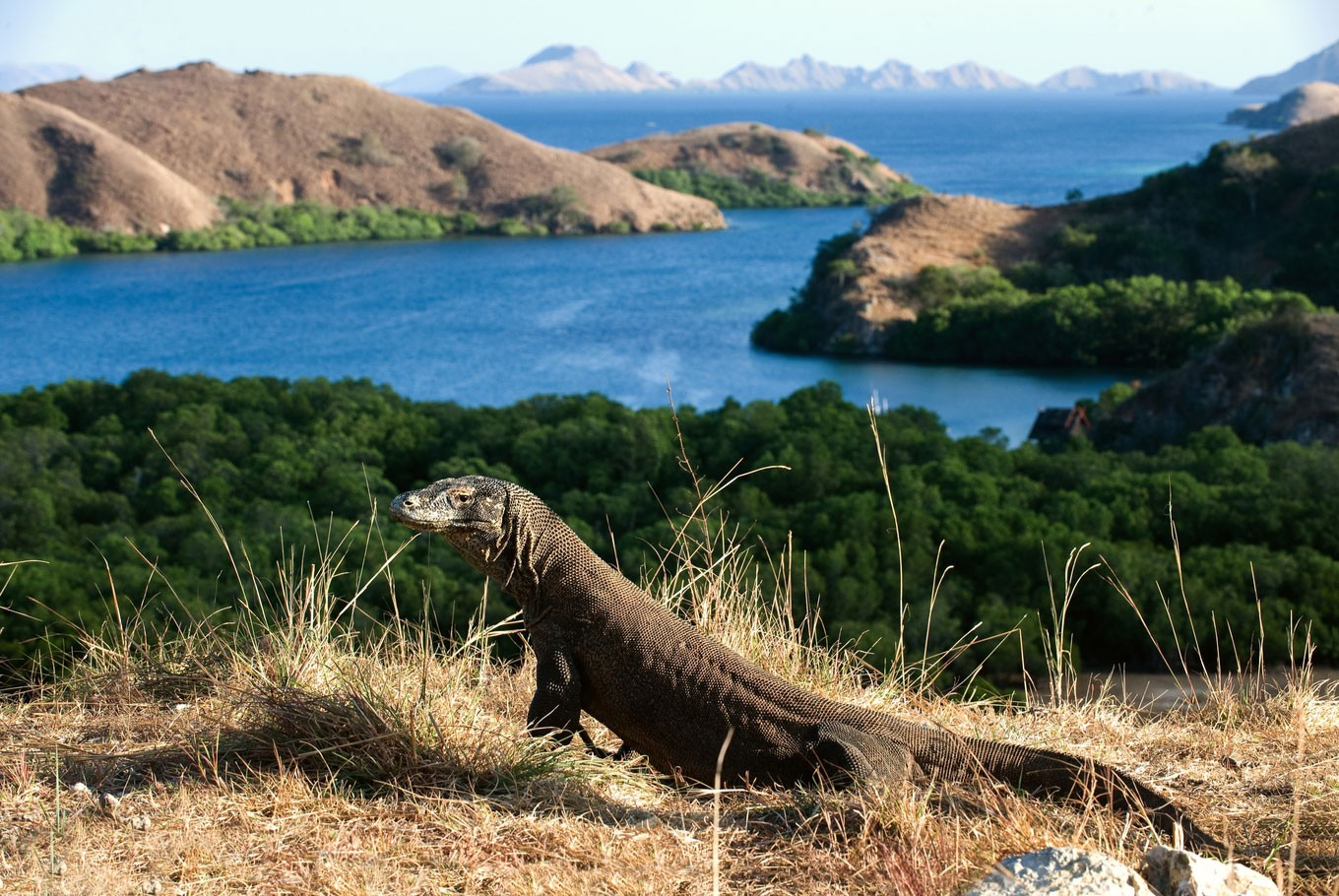 Tourism to Komodo Island must be controlled: Official