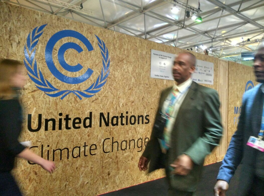 UN climate fund allocates US$500 million for forest recovery