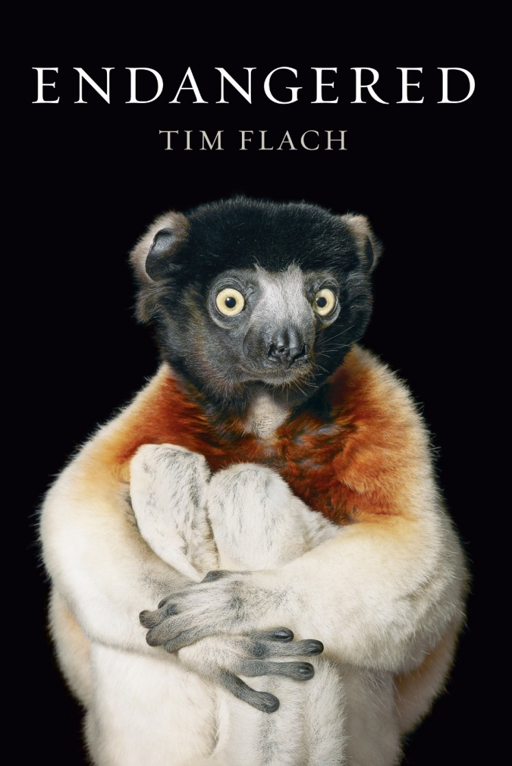A crowned sifaka lemur hugs his knees toward his chest on the book cover of Tim Flach's 'Endangered', Flach used a black velvet backdrop in many of his prints 'because I want you to focus on the animal,' he explained to an AFP journalist in Wahington on November 13, 2017. The collection of more than 150 images featured in 'Endangered,' a tome released by US publisher Abrams, spans the spectrum of International Union for Conservation of Nature rankings from not evaluated and vulnerable to critically endangered and extinct in the wild.