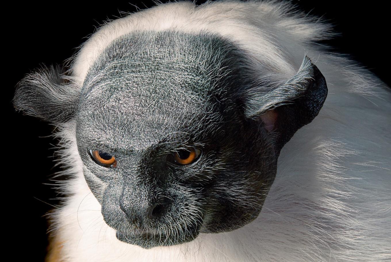 Photographer captures human face of endangered species