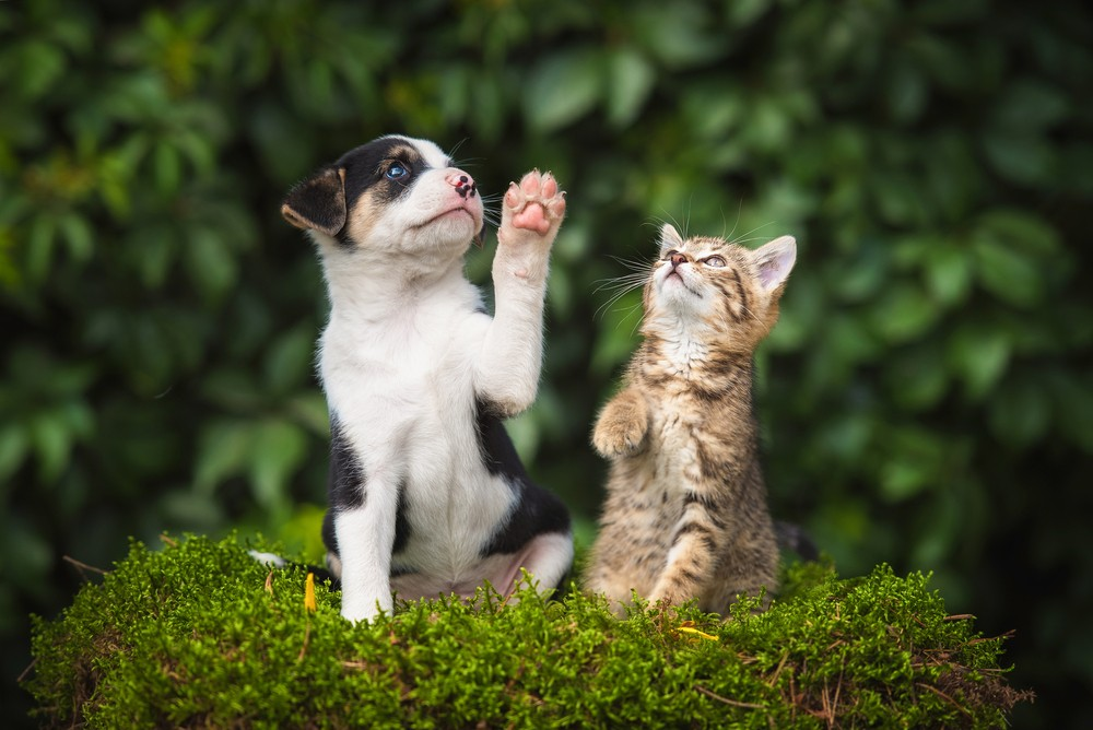 Dogs more intelligent than cats, scientists say