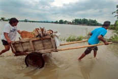 Villagers in Imogiri use a cart to transport their goats to higher ground, safe from the floods. JP/Aditya Sagita