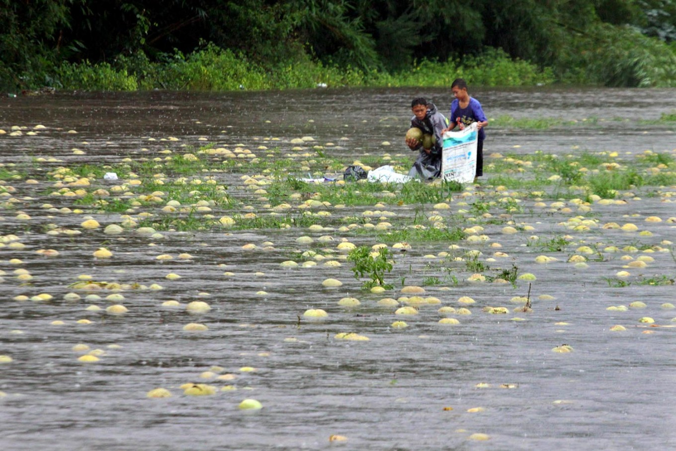 Two teenagers collect melons that were carried away by the floodwaters. JP/Aditya Sagita