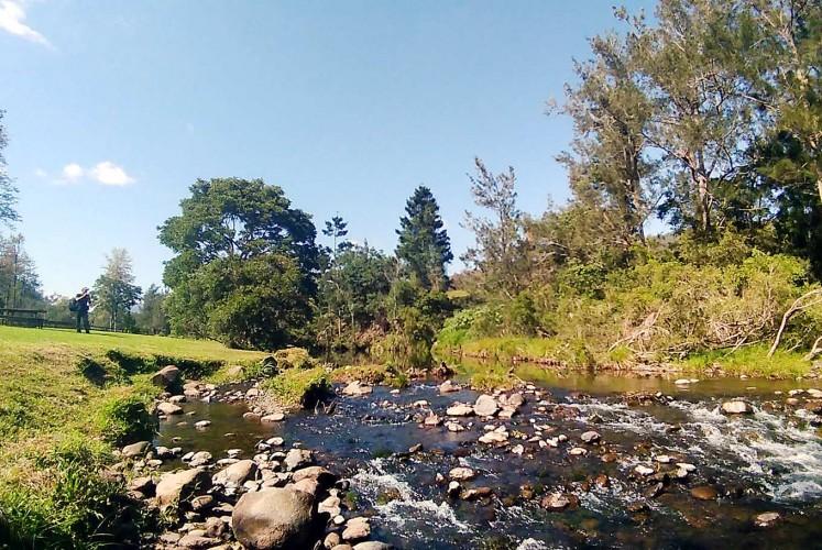 Fresh air: Canungra creek that runs behind O Reilly's Canungra Valley Vineyard.