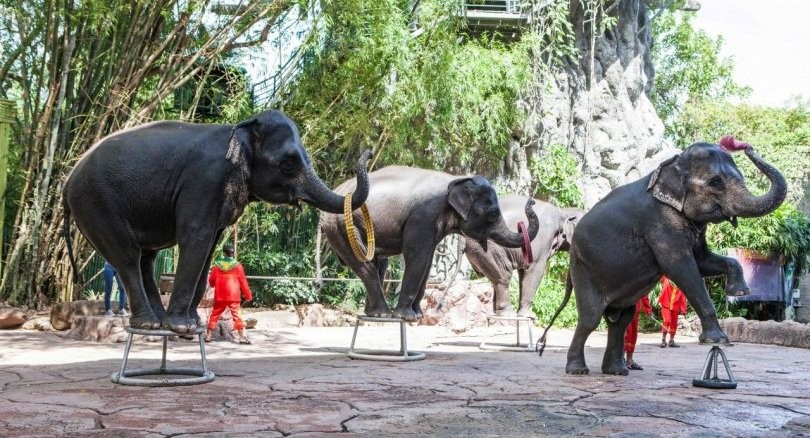 Video shows abusive taming of baby elephant for Thai tourism